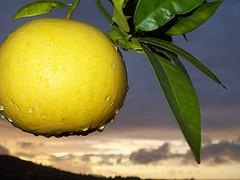 Аромат грейпфрута делает женщин значительно моложе