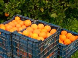 ящик апельсинов